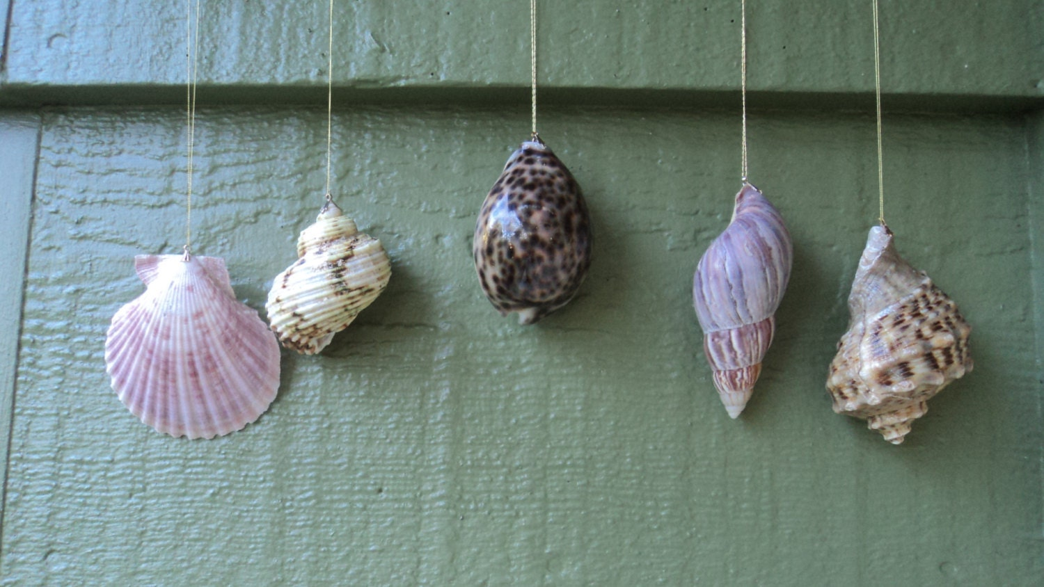 Lot of 5 Natural Seashell Christmas Ornaments,Turbo,Cowrie,Conch & More
