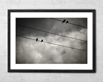 The Trace 11:25 - Bird Photography - Nature Photograph - Bird Print - Photo Art - Bird Wall Art - Photography Decor - Black and White Prints