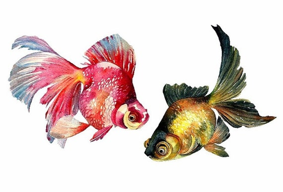 Goldfish art watercolor goldfish paintingfish art print for How to paint a fish