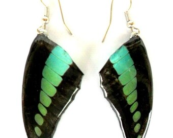 Real Butterfly Wings Earrings Handmade Jewelry Gift / Black / Turquoise Color