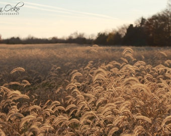 Golden Wheat Field at Dusk Photography Print