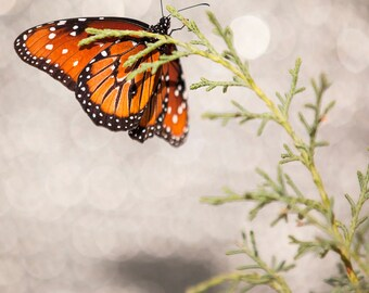 Butterfly Photograph, Color Print, Nature Photography, Monarch Butterfly