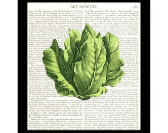 Lettuce Art Print, Vegetable Art, Kitchen Decor, Home Decor, Upcycled Book Page Dictionary Page - Item 131