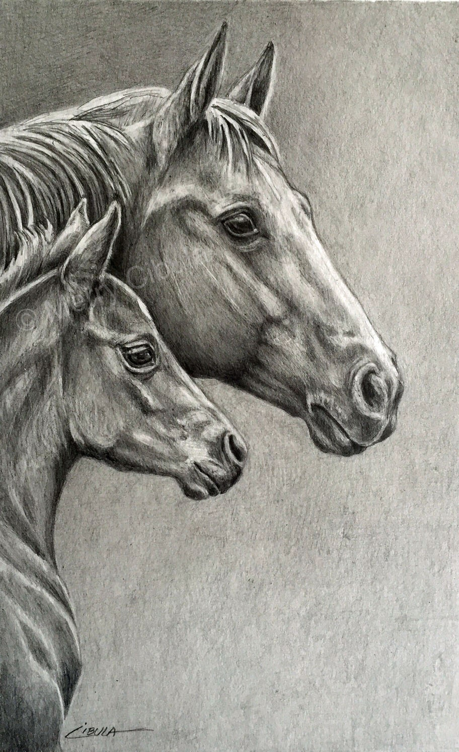 #01 (Part 1) How to draw a realistic horse - Digital Art ...  |Horse Art Drawings