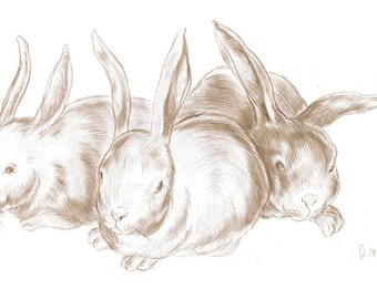 Bunny Group