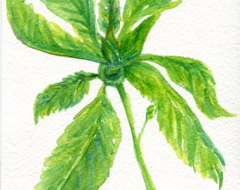 Basil Watercolor Painting Original, Small Food Art Painting, Kitchen Wall Art, 5 x 7, Original watercolor, Herbs watercolor art