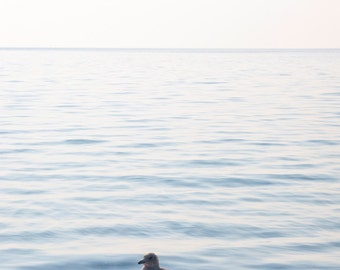 Seagull. Lake Superior beach scape. Photograph. Blue water