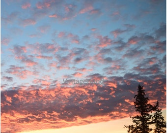 Pink Clouds Digital download / Colorful sunrise / tree silhouette / Photograph / Art download / Home Decor