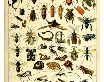 vintage french illustration learning board insects bugs collage sheet DIGITAL DOWNLOAD