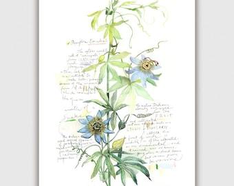 Passion flower botanical print, 8X10 Home decor, Blue Flower print, Gardening artwork, Watercolor botanical, Green Botanical poster painting