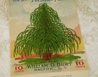 Fountain Plant, annual, William D. Burt Seed Company, 1915 unused