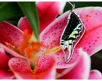 Real Butterfly Wing Necklace. Green-banded Urania Moth.