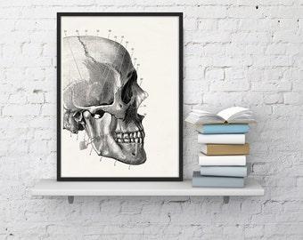 Human skull detail  Print - Science prints wall art- Anatomy prints wall decor WSK013