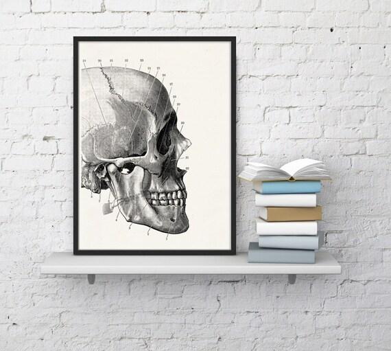 Human skull detail  Print - Science prints wall art- Anatomy prints wall decor doctor gifts under 10 art  SKA012WA4
