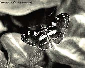 Butterfly, (I) Insect Photography, Fine Art Print, Black & White, Monochrome, Butterflies Home Decor, Nature Wall Art