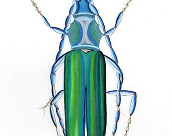 Blue Musk Beetle Print From My Watercolor Insect Painting. Specimen Entomology Natural History Wall Art.