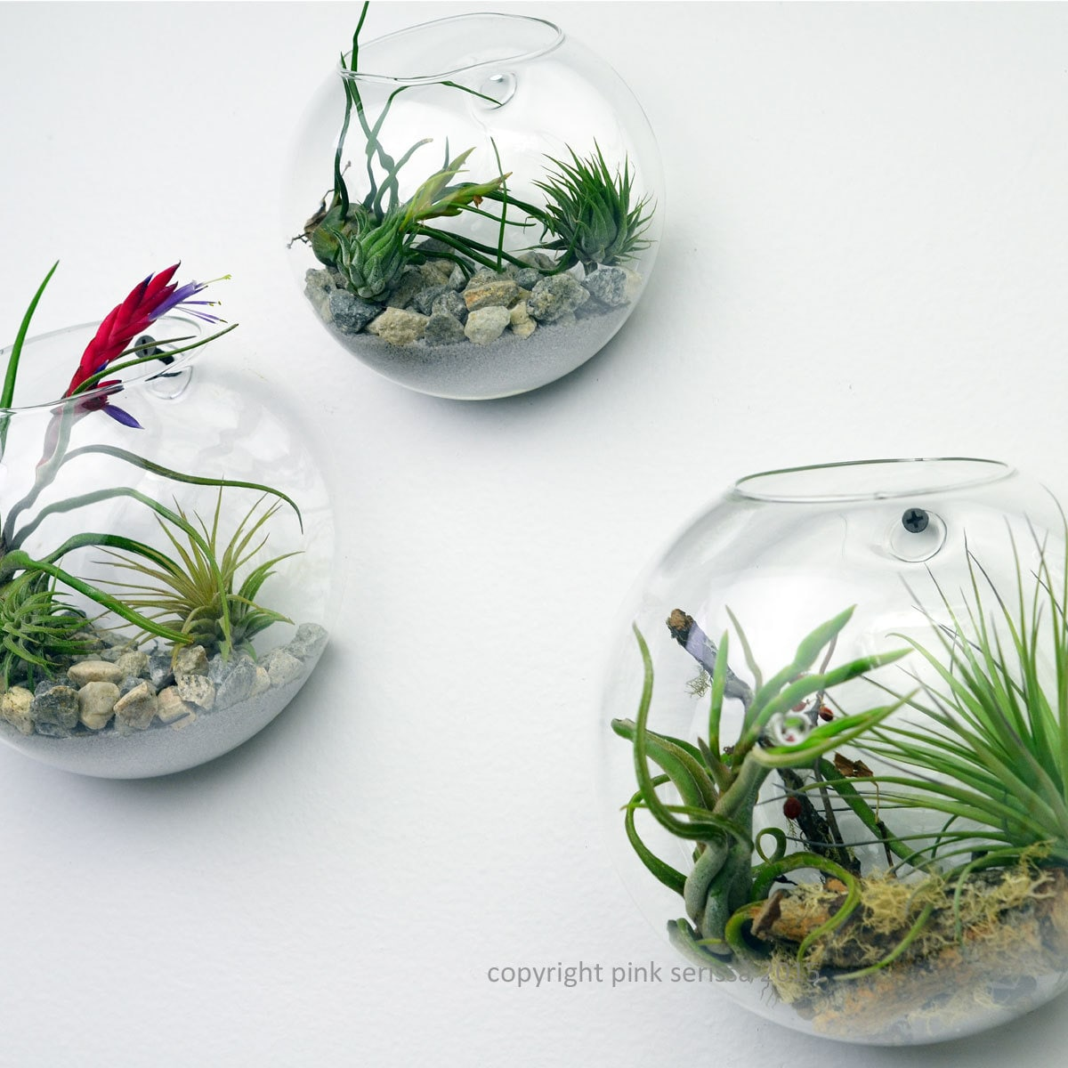 Wall terrarium living wall air plant by pinkserissa on for Air plant decoration