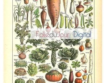 Digital VEGETABLES - Vintage French Dictionary Color Illustration - Instant Download full page printable