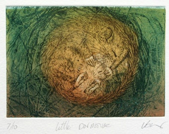 Dormouse sleeping. Affordable etching. Fine art print