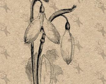 Galanthus Etsy