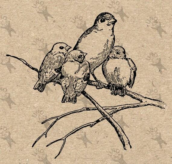 Items Similar To Retro Drawing Bird Birds Chicks Family Instant Download Digital Printable ...