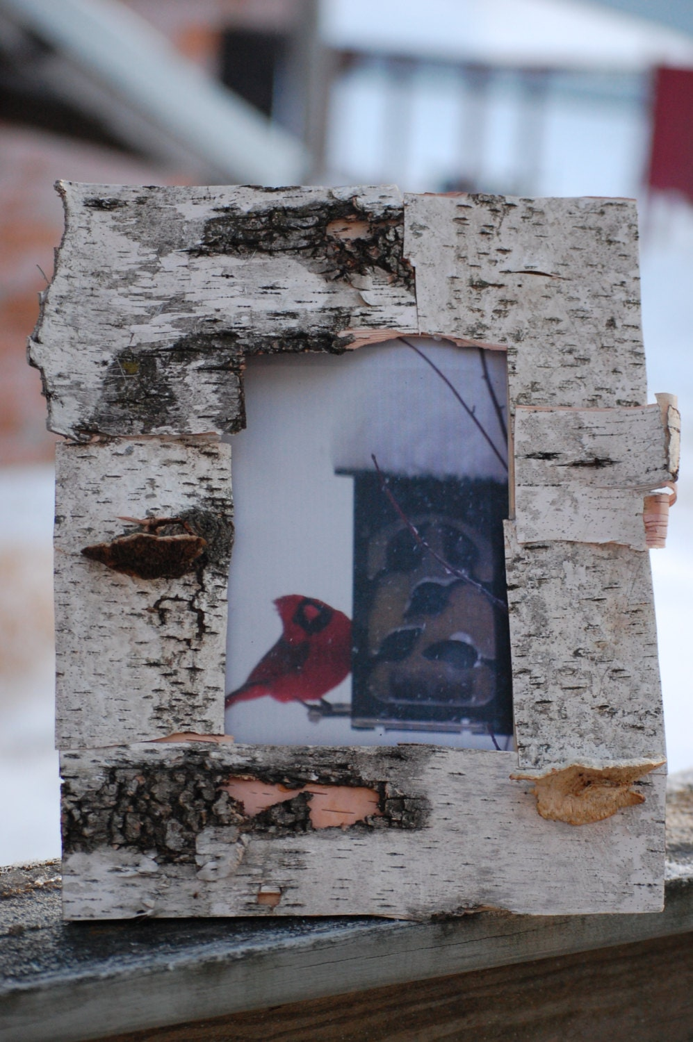 Wisconsin birch bark picture frame holds your by