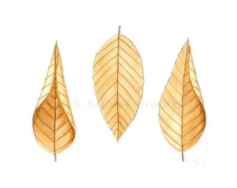 "Fall Leaves Art Print - Archival Fine Art Reproduction of Original Brown Beech Leaf Illustration, Neutral Nature Art; 8.5"" X 11"""