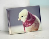 Chicks in Hats Chicken In A Miniature Red Floral Bandana Cute Chickens Baby Animal Magnet