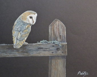 SALE - Waiting Patiently - Original Watercolour of a Barn Owl waiting for his next meal - by local artist Peter Watts