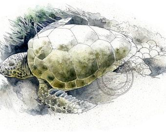 Loggerhead Turtle watercolour - wildlife art - nature print of original artwork