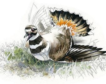 Killdeer - bird art, wildlife art - nature print of original artwork