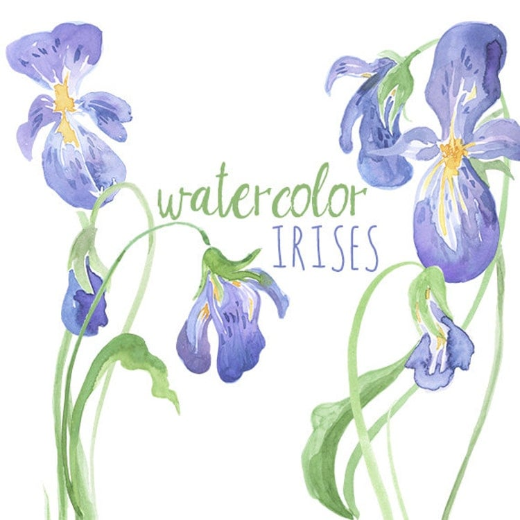 Watercolor Irises Clip Art Iris Artwork By