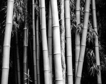 Bamboo: 8x10 black & white nature photography. Also available in a wide range of sizes.