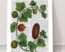 Squash Vine 3 - botanical print kitchen print kitchen decor food poster kitchen poster vegetable print gift for Gourmet housewarming gift