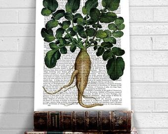 Vegetable Print Parsnip 1 - botanical print kitchen print kitchen decor dining room decor food illustration kitchen art gift for cook chef
