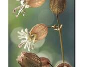 campion canvas: flower photography, canvas art, nature photography, fine art, large art canvas , nature canvas