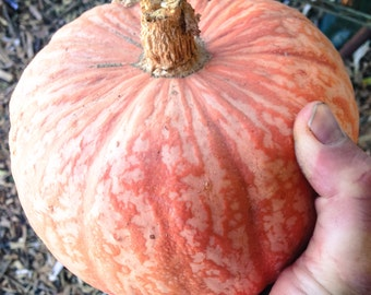 Lower Salmon River Winter Squash Seeds (~20): Certified Organic, Non-GMO, Heirloom Seed Packet