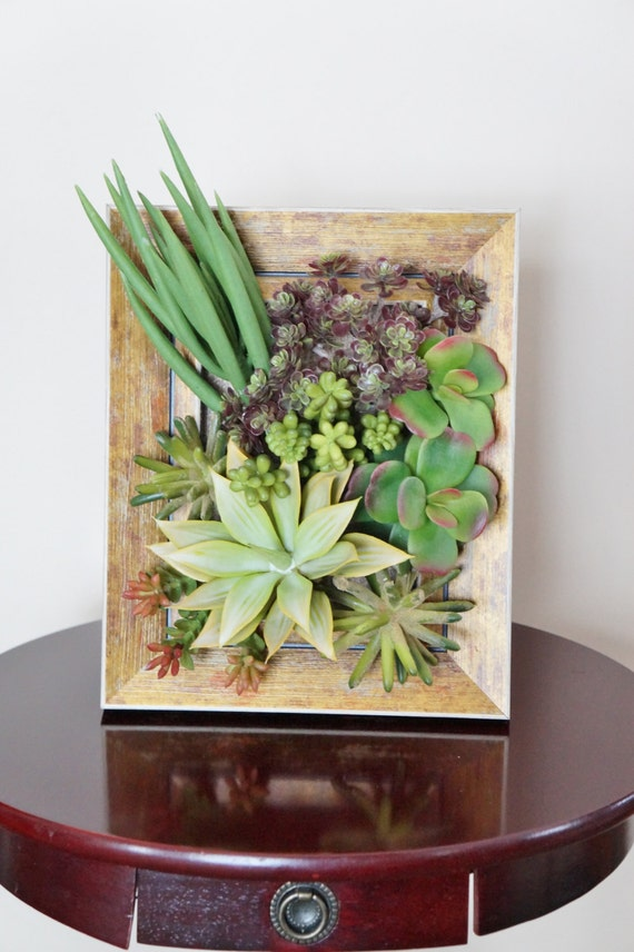 Photo Frame Arrangement Composition Florale Plantes Grasses