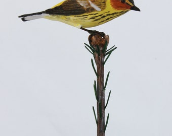 cape may warbler carving