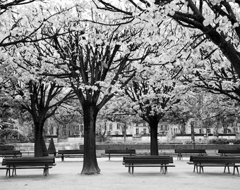 Paris black and white photography, Paris park in autumn, Paris photography, black and white photo, Paris in autumn, autumn trees