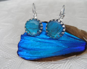 Blue Morpho Butterfly Wing Under Glass Crown Leverback Earrings-Come Fly With Me-Nature's Art-Symbol of Joy,Change,Rebirth-Gifts 30 & Under