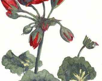 flower painting- Red Geranium - watercolor art print