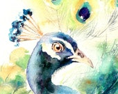Peacock Bird Watercolor Painting Art Print, Bird Watercolour Art Wall Art