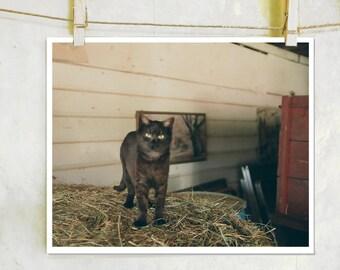 Barn Cat - Cat Photography, Farm Photography, Farm House Decor, Film Photography,  Farm Life, Farm Cat, Farm Life Photography