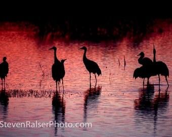 Sandhill Cranes Bosque del Apache, NM, sunset color photograph