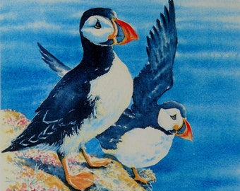 "Puffins - Skomer Island."" A signed and limited print by Andrew Bailey. Birds, Wildlife, Flower, Seascapes and Woodland paintings and prints."