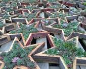 Succulent Star Vertical Garden Kits (Planter + Cuttings)