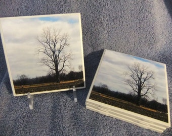 Lonley Bare Tree Coasters