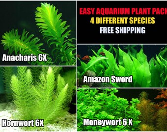 4 Live Aquarium Plant Species Package - Various Kinds - Anacharis, Amazon and more!