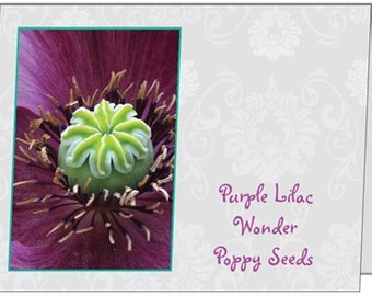 Purple Lilac Wonder Poppy Seeds